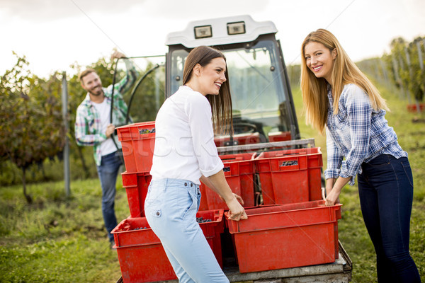People harvesting grapes in the vineyard in autumn Stock photo © boggy