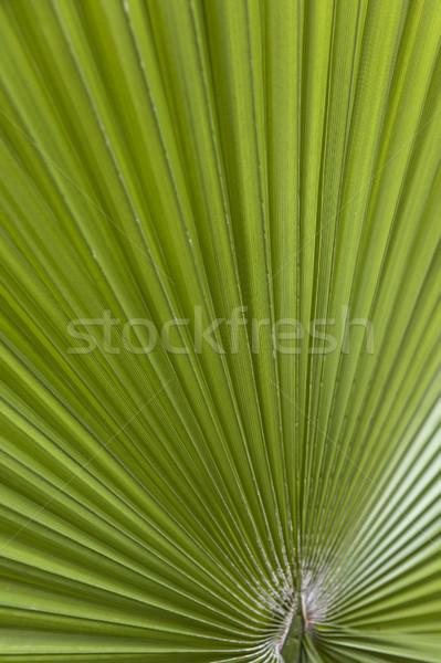 Vert feuille de palmier vue forêt feuille Photo stock © boggy