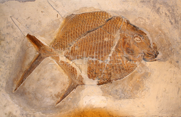 Fossil fish  Stock photo © boggy