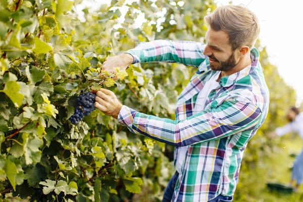 Jonge man werken wijngaard knap wijn man Stockfoto © boggy