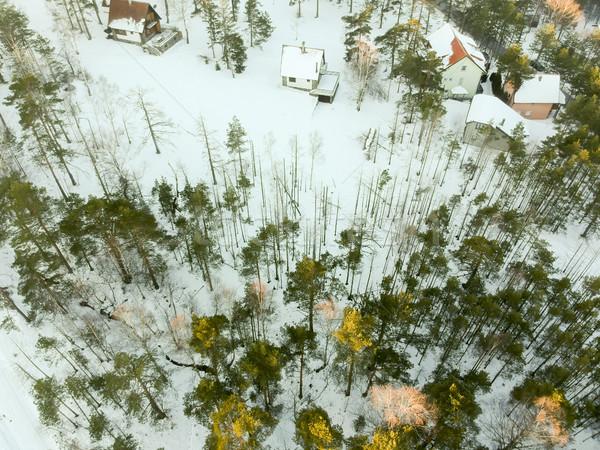 Sırbistan kış zaman ağaç doğa Stok fotoğraf © boggy