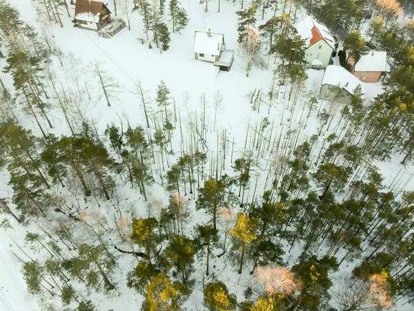 Serbie hiver temps arbre nature Photo stock © boggy