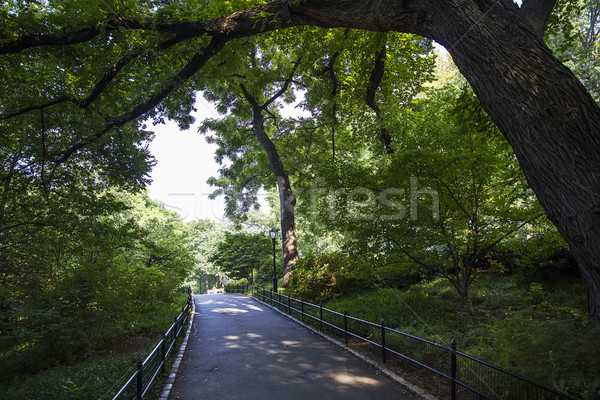 Central Park, New York, United States Stock photo © boggy