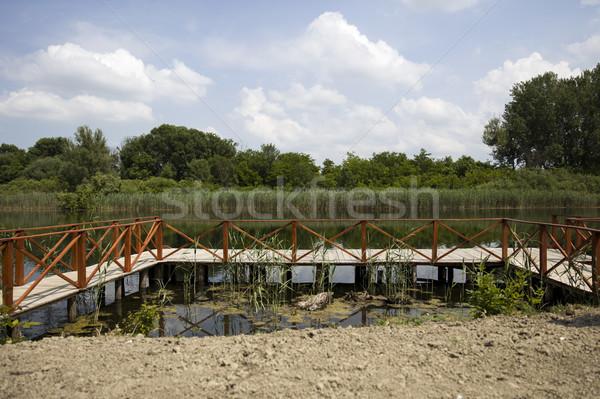 Houten vijver water bomen Stockfoto © boggy