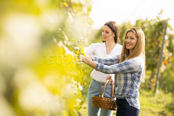 Dois mulheres jovens vinha cesta uvas Foto stock © boggy