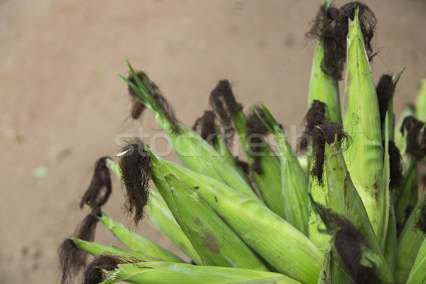 Corn cob and green leaves Stock photo © boggy