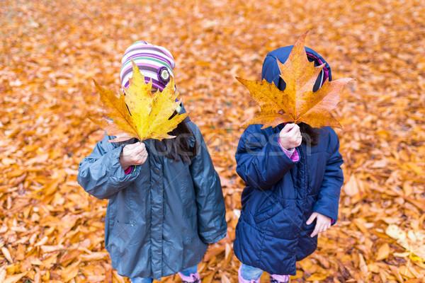 Gizlenmiş yüz akçaağaç yaprağı sonbahar park Stok fotoğraf © boggy