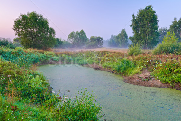 Trees on meadow and swamp full of duckweeds. Hazy morning rural  Stock photo © bogumil