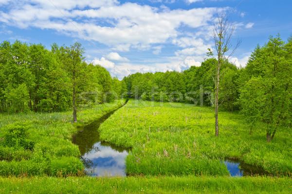 Prato foresta panorama albero nubi legno Foto d'archivio © bogumil