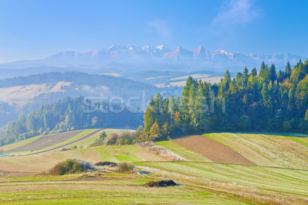 Görmek dağlar sabah manzara Polonya ağaç Stok fotoğraf © bogumil