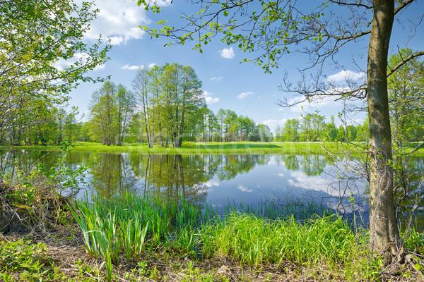 Folyó díszlet természet tartalék napos tavasz Stock fotó © bogumil