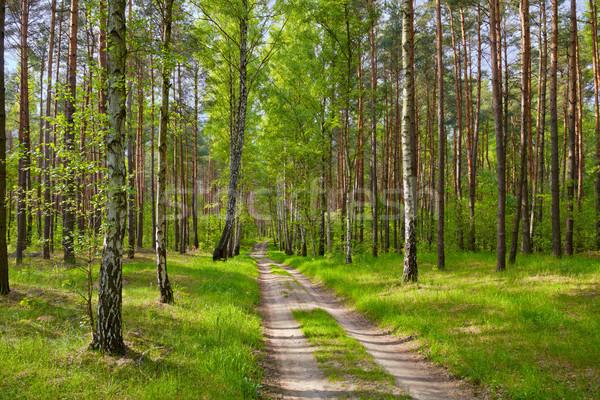 Yol orman güzel duvar kağıdı ahşap arka plan Stok fotoğraf © bogumil