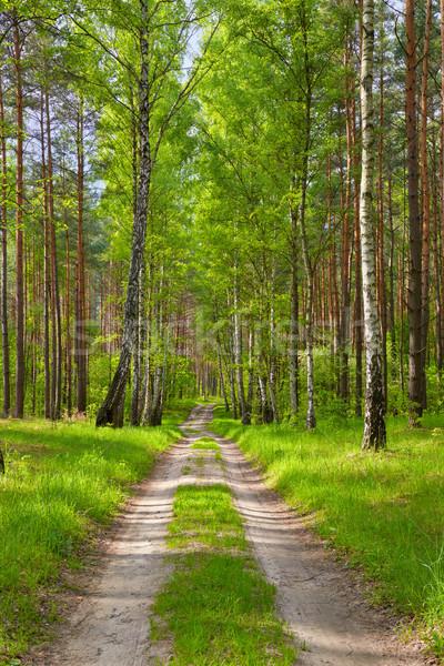 Façon forêt belle wallpaper bois fond Photo stock © bogumil