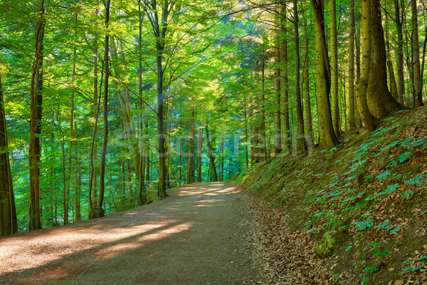Path by the green forest. Trekking trail in nature reserve. Stock photo © bogumil
