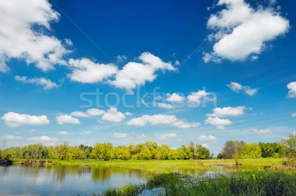 Gölet duvar kağıdı Polonya su ağaç çim Stok fotoğraf © bogumil