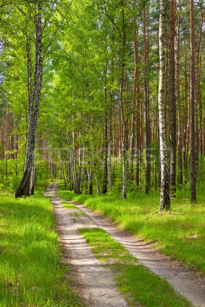 Yol orman yol ahşap arka plan güzellik Stok fotoğraf © bogumil