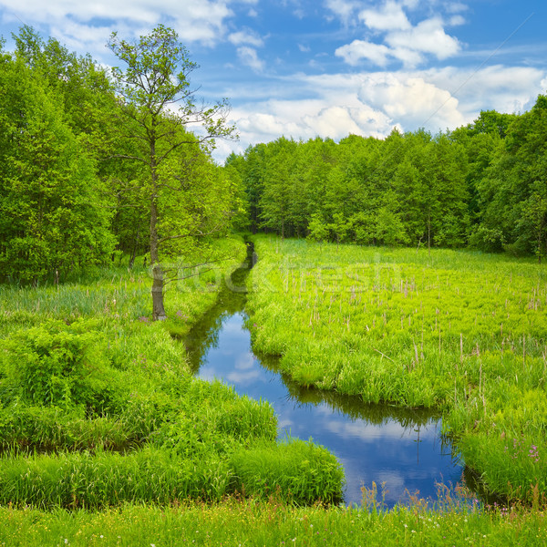 Brook and meadow and forest. Stock photo © bogumil