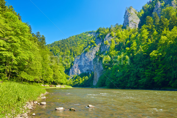 Dunajec River Gorge Stock photo © bogumil