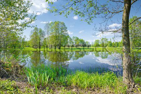 Voorjaar landschap bomen rivieroever rivier Stockfoto © bogumil