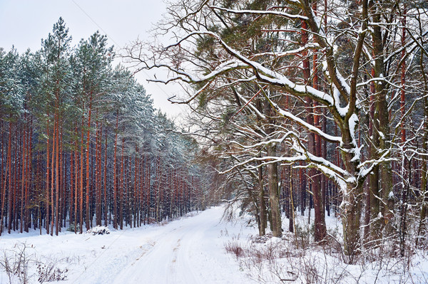 Kış manzara ağaç orman gökyüzü çim Stok fotoğraf © bogumil