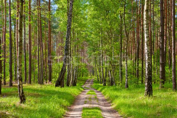 Modo foresta bella wallpaper legno sfondo Foto d'archivio © bogumil