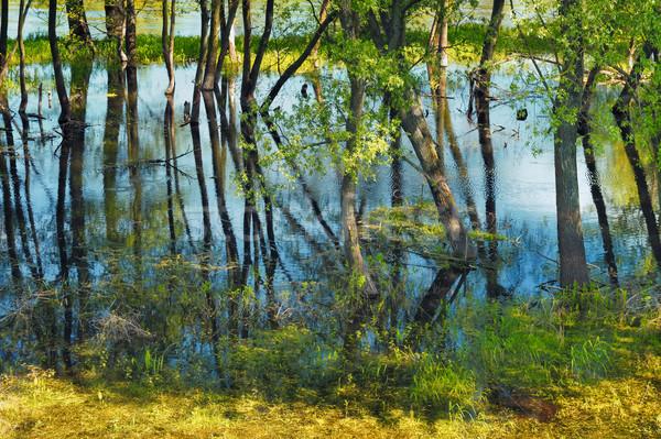 árvores pântano água árvore grama madeira Foto stock © bogumil