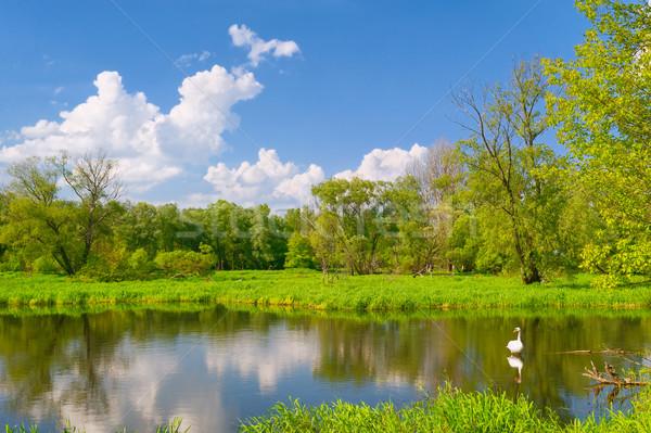 пейзаж лебедя наводнения реке Польша красивой Сток-фото © bogumil