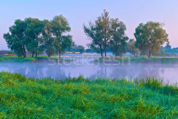 Beautiful morning with trees on the shores of the Narew river. Stock photo © bogumil