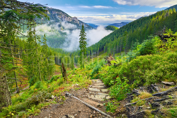 Mountain trail at the forest. The Tatra Mountains, Carpathians. Stock photo © bogumil