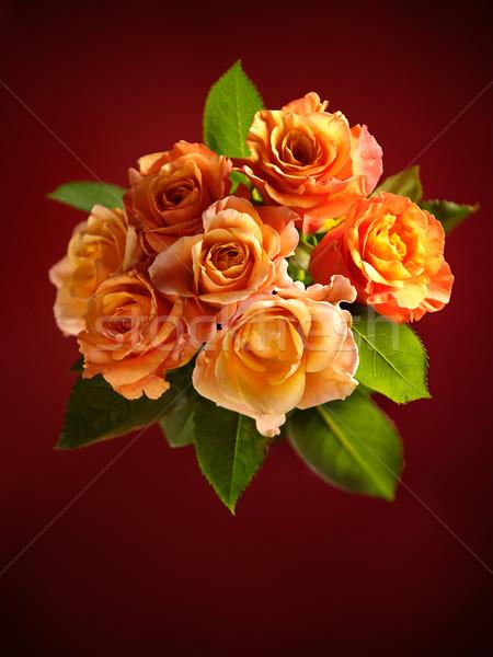 Сток-фото: красивой · букет · оранжевый · роз · темно · красный