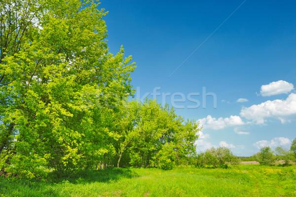 Bahar manzara ağaçlar büyüyen çayır güzel Stok fotoğraf © bogumil