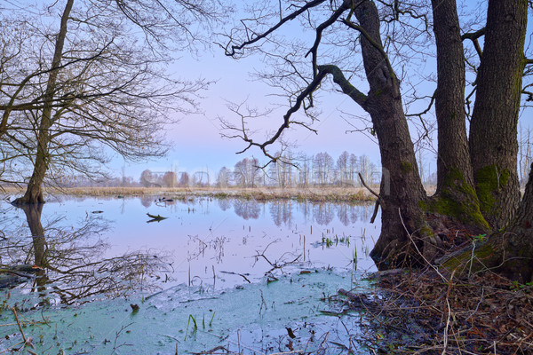 Mysterious landscape with flood waters of The Narew River.  Stock photo © bogumil