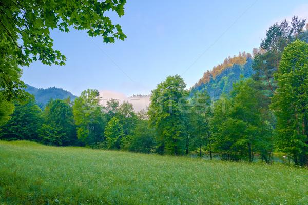 Ağaçlar sabah dağlar güzel gökyüzü ahşap Stok fotoğraf © bogumil