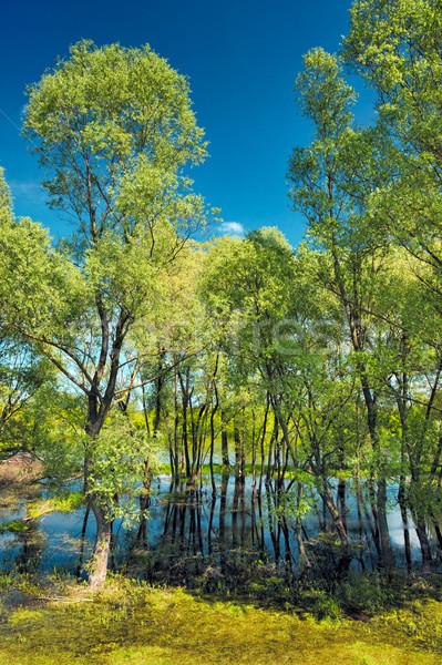Tapéta fák mocsár folyó Lengyelország víz Stock fotó © bogumil