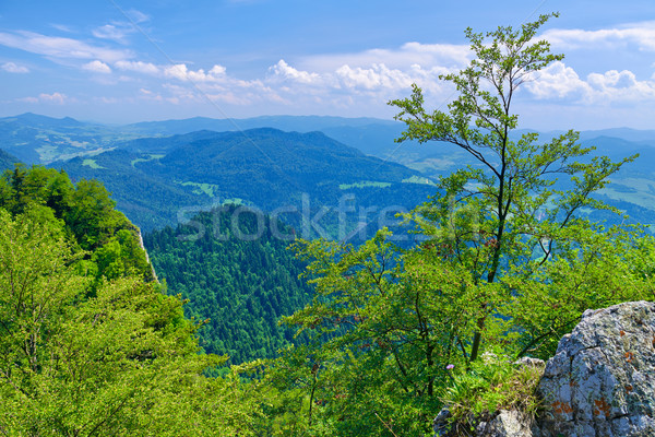 Summer scenic from The Three Crowns massif. Stock photo © bogumil