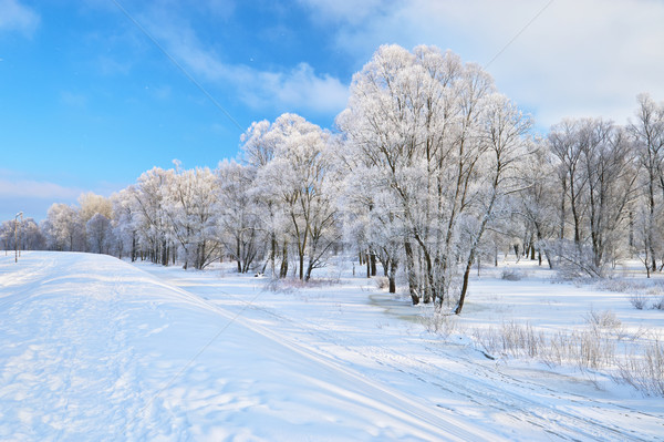 Snowy landscape in the Narew river valley. Beautiful winter trail Stock photo © bogumil