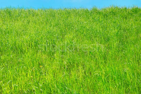 新鮮な 草 背景 緑の草 春 青 ストックフォト © bogumil
