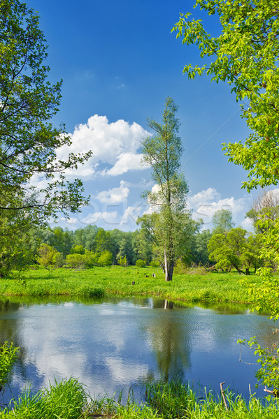 Yaz manzara yalnız ağaç mavi gökyüzü su Stok fotoğraf © bogumil