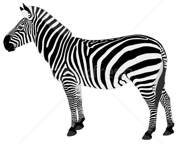 Stockfoto: Gedetailleerd · illustratie · zebra · textuur · afrika · silhouet