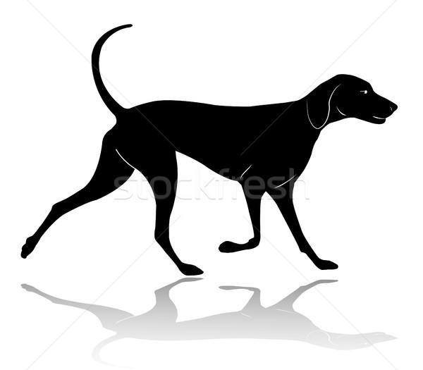 hunting dog walking silhouette Stock photo © bokica