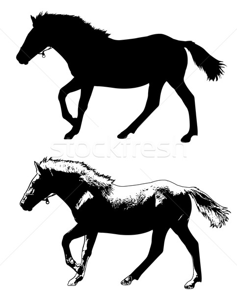 horse silhouette and illustration Stock photo © bokica