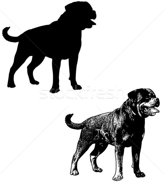 Rottweiler köpek siluet kroki örnek grafik Stok fotoğraf © bokica