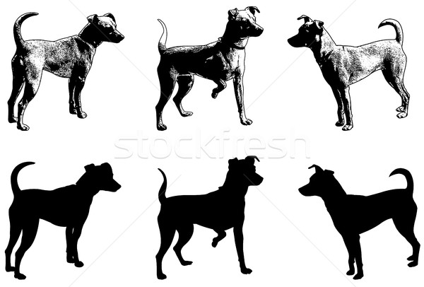 silhouettes and sketch illustration of mini pincher dog Stock photo © bokica