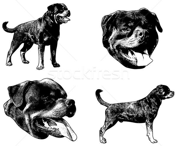Rottweiler köpek kroki örnek hizmet siluet Stok fotoğraf © bokica