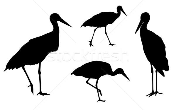 stork silhouettes Stock photo © bokica