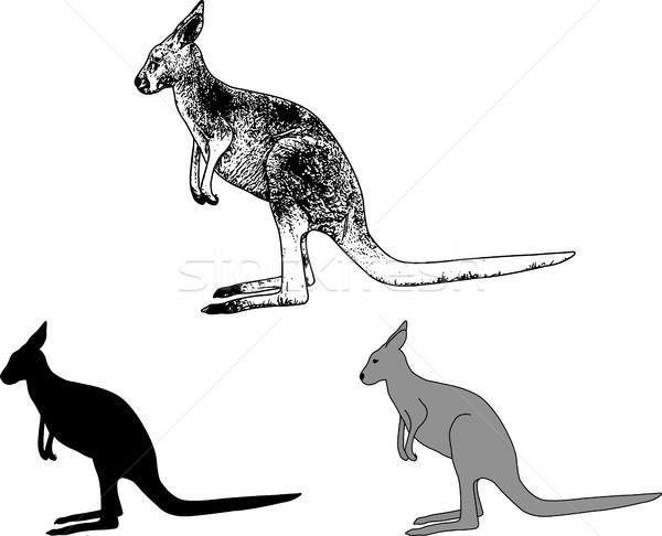 kangaroo sketch and silhouette Stock photo © bokica