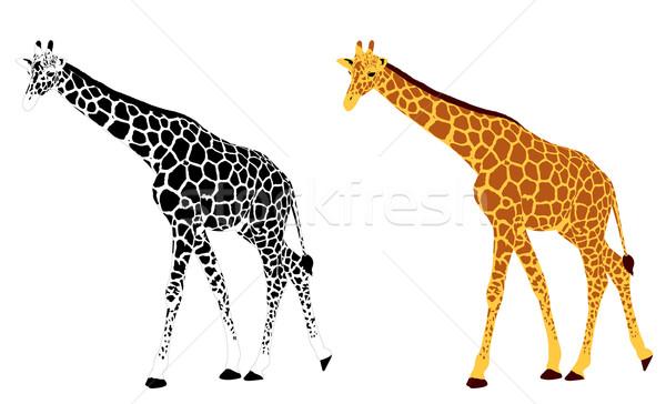 подробный иллюстрация жираф природы Африка силуэта Сток-фото © bokica