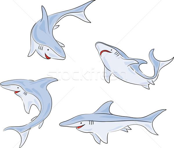 четыре акула фотографий молодые Сток-фото © bonathos