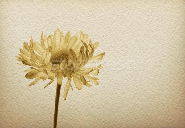 Flower on a vintage paper-1  Stock photo © bonathos