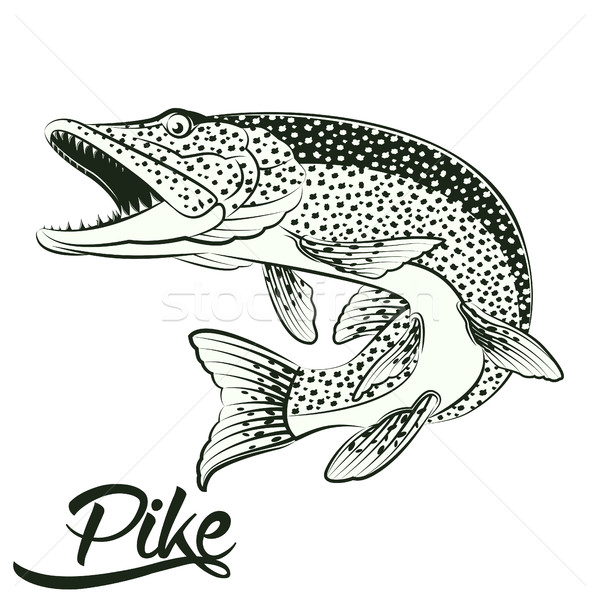 Jumping Pike isolated Stock photo © BoogieMan